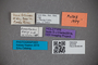 2819756 Euaesthetus bierigi HT labels2 IN