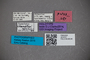 2819757 Euaesthetus chandleri HT labels2 IN