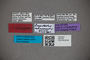 2819758 Euaesthetus colimamontis HT labels IN