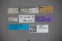 2819761 Euaesthetus dampfi HT labels2 IN