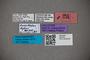 2819762 Euaesthetus dybasi HT labels IN