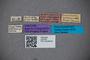2819765 Euaesthetus marionensis ST labels IN