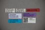 2819767 Thinocharis toamasina HT labels IN