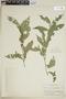Faramea quinqueflora Poepp. & Endl., PERU, F