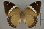 124989 Charaxes numenes d IN