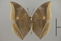 124991 Charaxes zelica v IN