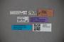 2819775 Euaesthetus newtoni HT labels IN
