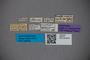 2819776 Euaesthetus subiridipennis ST labels IN