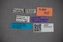 2819780 Octavius dybasi HT labels2 IN