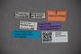 2819780 Octavius dybasi HT labels IN
