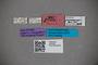 2819788 Octavius panamensis HT labels IN