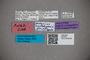 2819792 Octavius rostellipenis HT labels IN