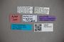 2819793 Octavius similior HT labels2 IN