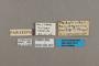 95307 Pedaliodes scydmaena PT labels IN