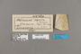 124329 Heliconius erato amazona labels IN