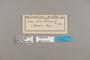 124331 Heliconius erato hydara labels IN