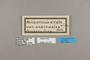 124333 Heliconius erato amazona labels IN