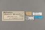 124337 Heliconius demeter labels IN