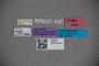 2819794 Octavius similis HT labels2 IN
