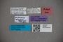 2819801 Octavius wagneri HT labels2 IN