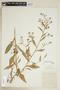 Rorippa palustris subsp. hispida (Desv.) Jonsell, U.S.A., A. King 480, F