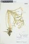 Rorippa crystallina Rollins, Canada, J. W. Thieret 7413, F