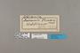 124399 Protogoniomorpha temora labels IN