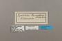 124420 Chlosyne lacinia saundersi labels IN