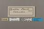 124423 Chlosyne erodyle poecile labels IN