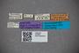 2819809 Dianous azureus ST labels IN