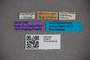 2819813 Dianous chinensis ST labels IN