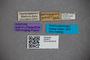 2819815 Stenus carinipennis ST labels IN