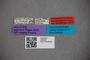 2819818 Carpelimus curvus HT labels IN