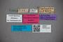 2819807 Polyphematiana liliputana LT labels IN