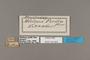 124450 Castilia perilla labels IN