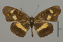 124458 Phyciodes sp d IN