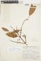 Garcinia gardneriana (Planch. & Triana) Zappi, BOLIVIA, F