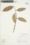 Garcinia gardneriana (Planch. & Triana) Zappi, PARAGUAY, F