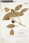 Garcinia gardneriana (Planch. & Triana) Zappi, ECUADOR, F