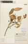 Garcinia guacopary (S. Moore) M. Nee, BRAZIL, F