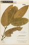 Garcinia macrophylla Mart., VENEZUELA, F