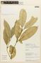 Garcinia madruno (Kunth) Hammel, PERU, F