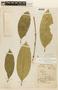 Garcinia madruno (Kunth) Hammel, BOLIVIA, F