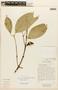 Garcinia madruno (Kunth) Hammel, ECUADOR, F
