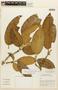 Garcinia madruno (Kunth) Hammel, BRAZIL, F