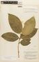 Garcinia madruno (Kunth) Hammel, BRITISH GUIANA [Guyana], F
