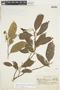 Garcinia gardneriana (Planch. & Triana) Zappi, BRAZIL, F