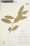 Garcinia gardneriana (Planch. & Triana) Zappi, PERU, F