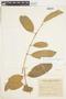Garcinia gardneriana (Planch. & Triana) Zappi, ARGENTINA, F