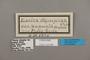 124481 Eunica caelina augusta labels IN